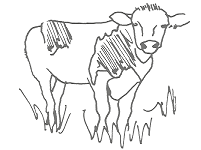 Cow2 small.png